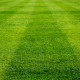 straight line on beautiful green grass of football field, soccer